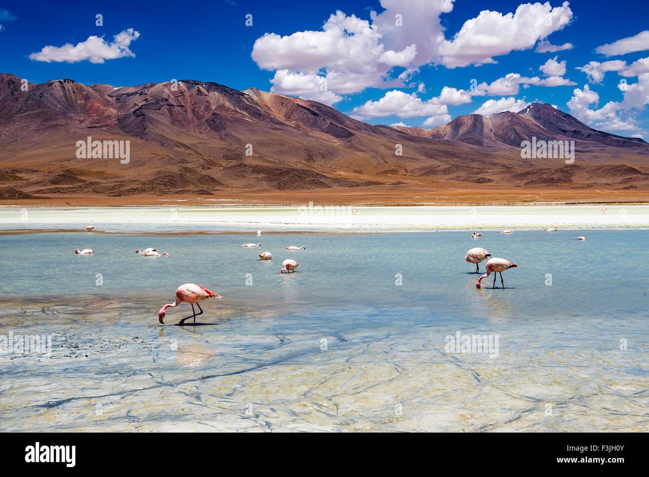 Flamingos in einer Lagune in der bolivianischen Altiplano Stockbild