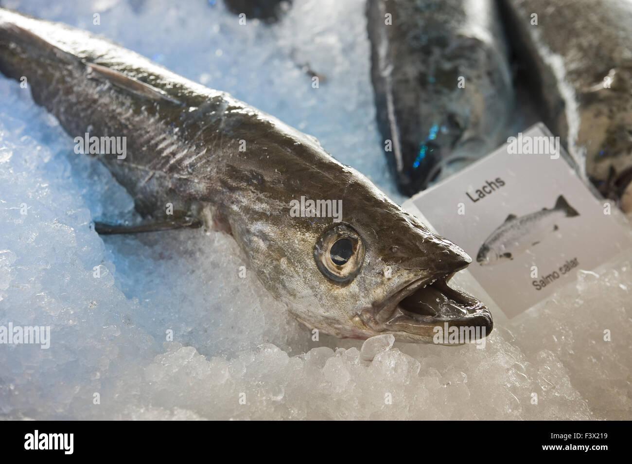 Lachs Stockbild