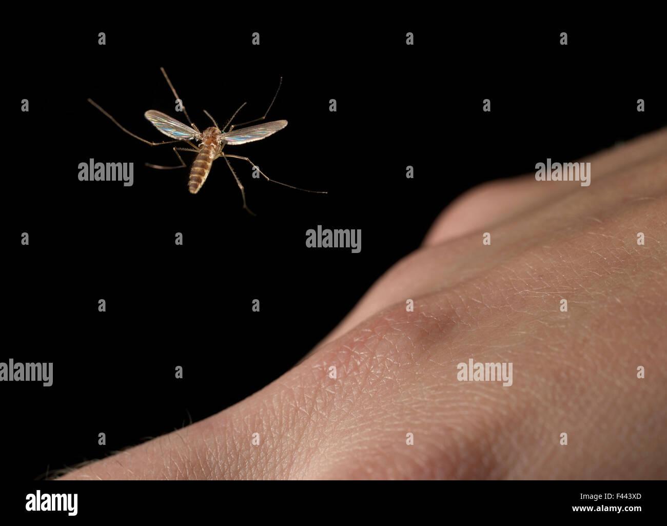 Mücken fliegen über eine menschliche hand Stockbild