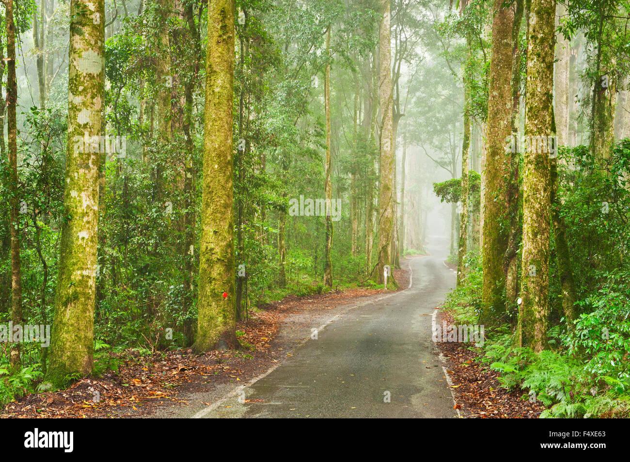 Schmale Straße durch dichten Regenwald. Stockbild