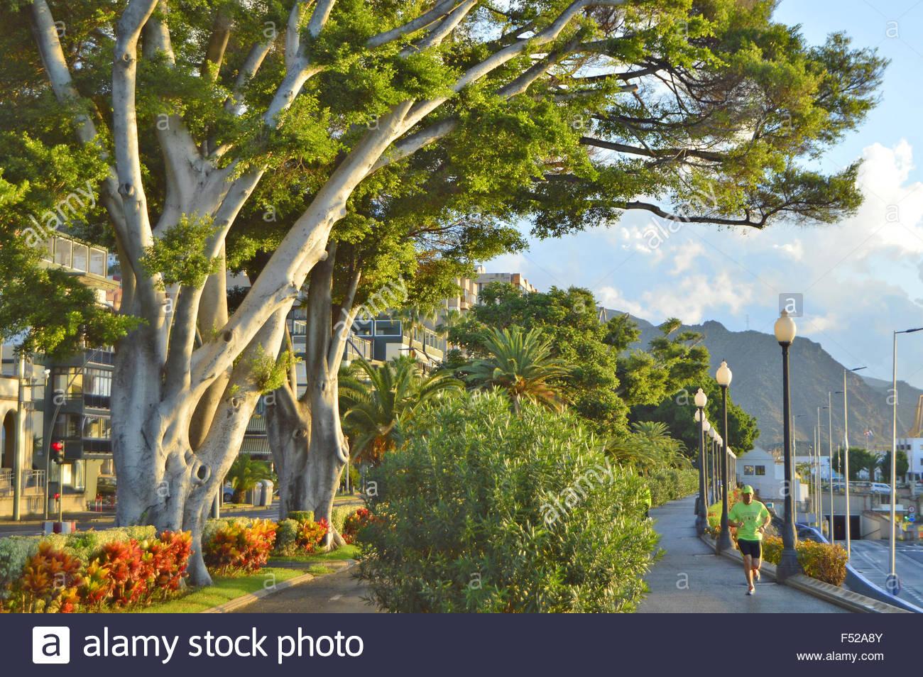 Hafen Promenade Allee der Bäume in Santa Cruz De Tenerife-Kanarische Inseln-Spanien Stockbild