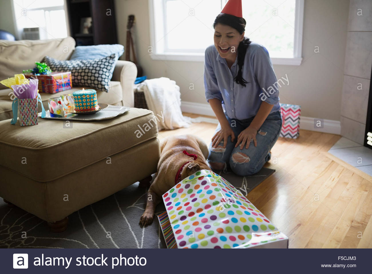 Hund Geburtstagsgeschenk im Wohnzimmer öffnen Stockbild