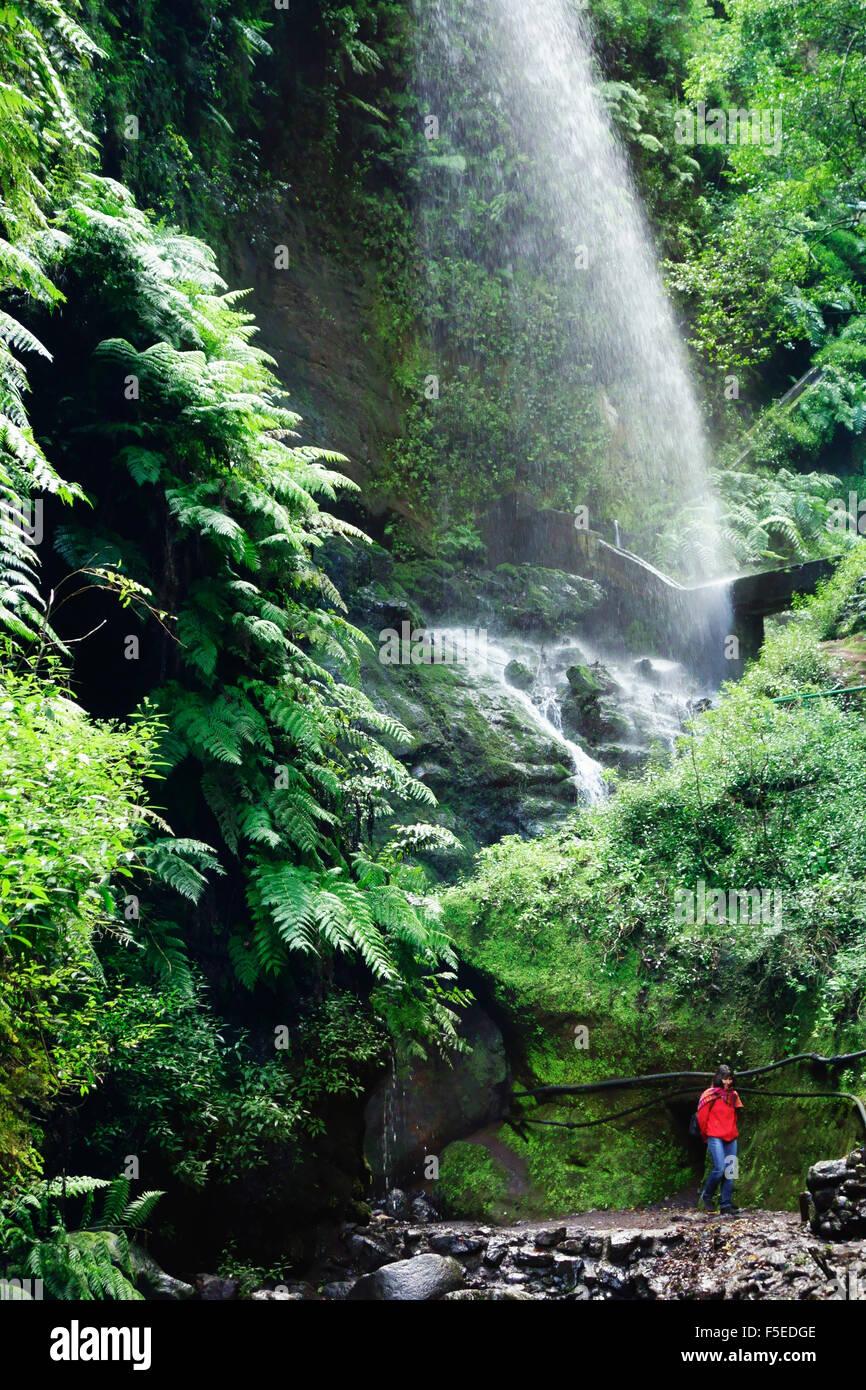 Laurel Wald, Los Tilos-Biosphären-Reservat, La Palma, Kanarische Inseln, Spanien, Europa Stockfoto