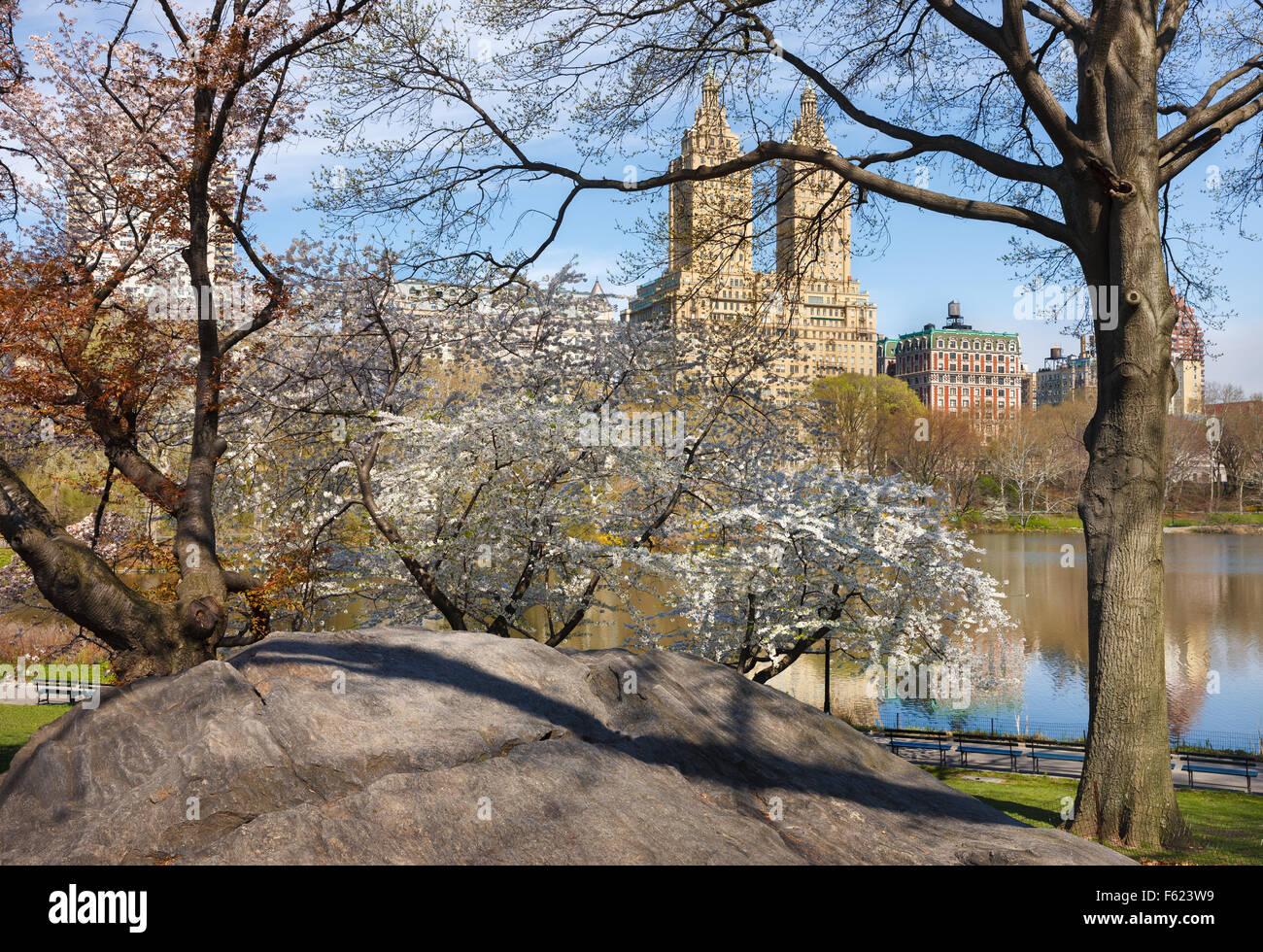Central Park Lake mit blühenden Yoshino Kirschbäume im Frühling, Upper West Side von Manhattan, New Stockbild