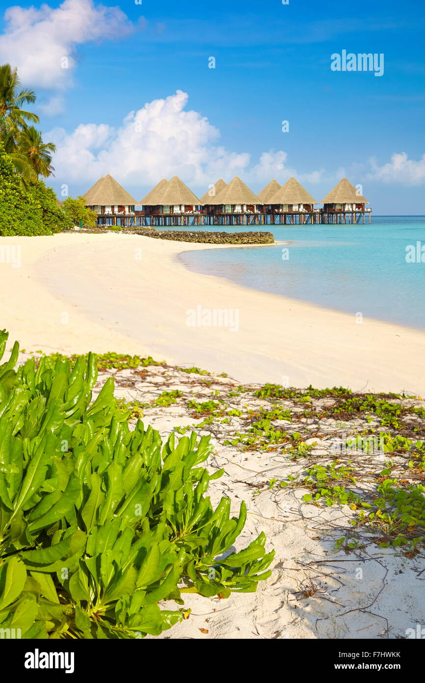 Tropischer Strand, Insel der Malediven, Ari Atoll Stockbild