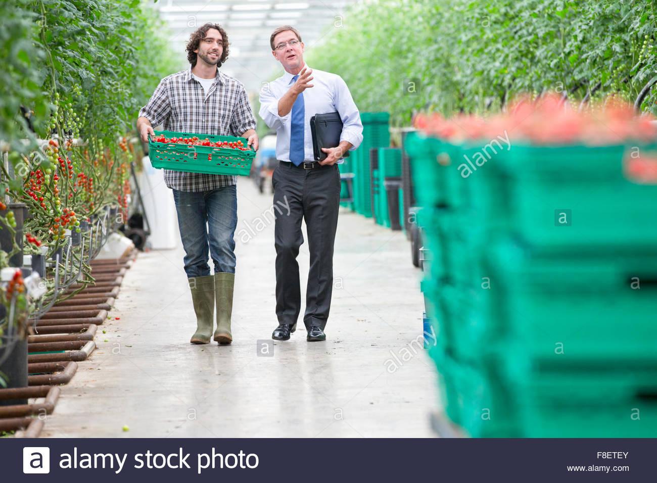 Geschäftsmann und Züchter mit Kiste Tomaten im Gewächshaus Stockbild