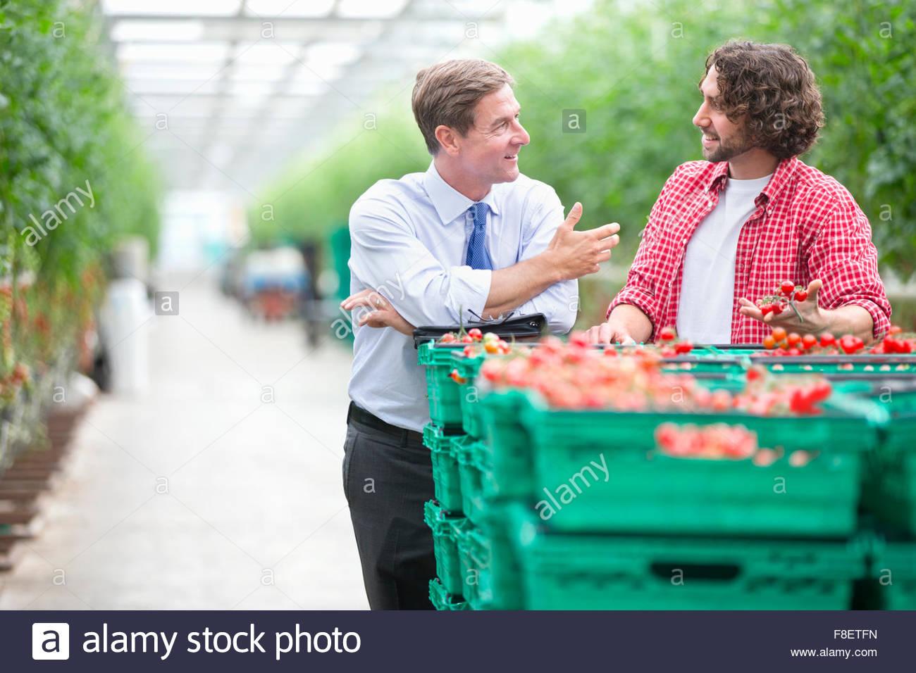 Geschäftsmann und Züchter diskutieren reife Tomaten in Kisten im Gewächshaus Stockbild
