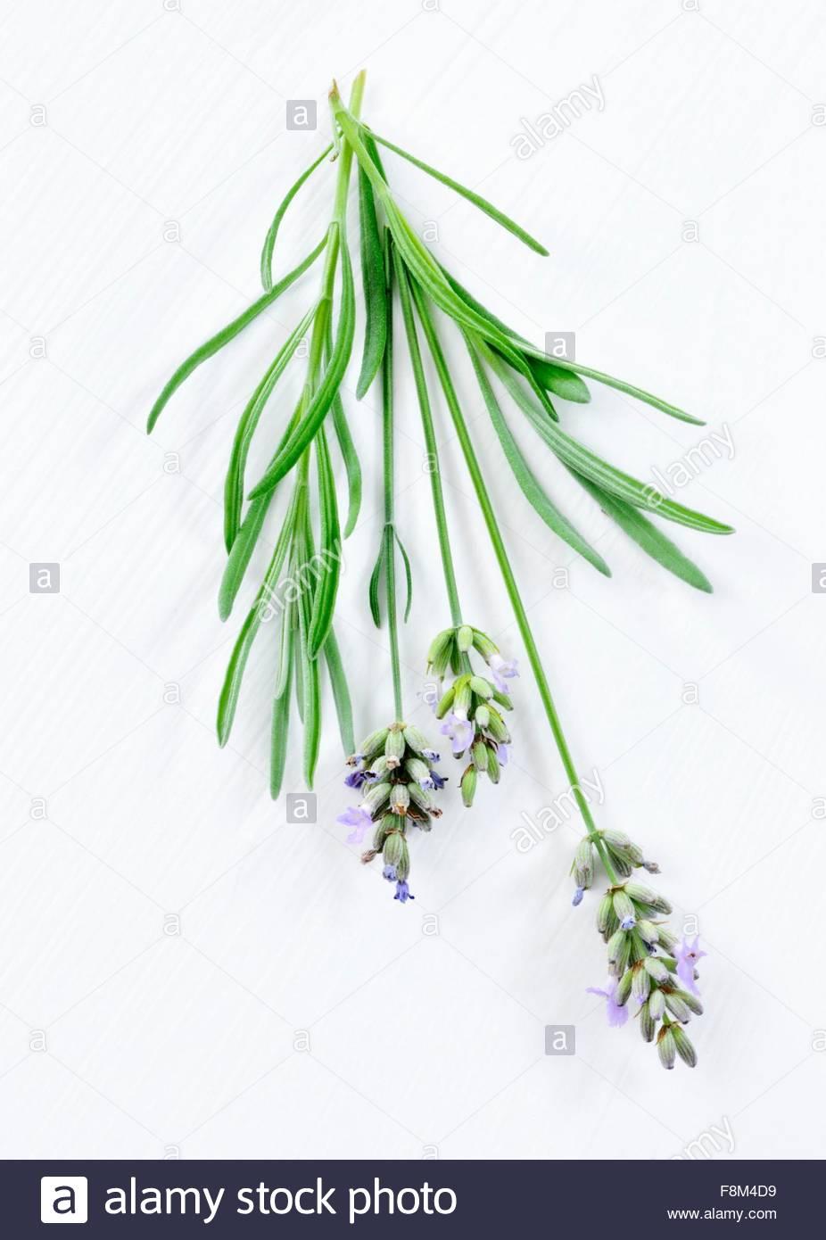 Lavendel mit Blüten Stockbild
