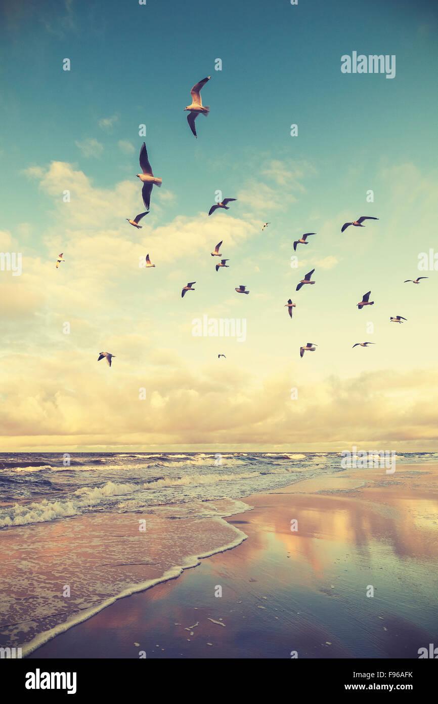 Vintage stilisierten fliegenden Vögel über einen Strand bei Sonnenuntergang. Stockbild