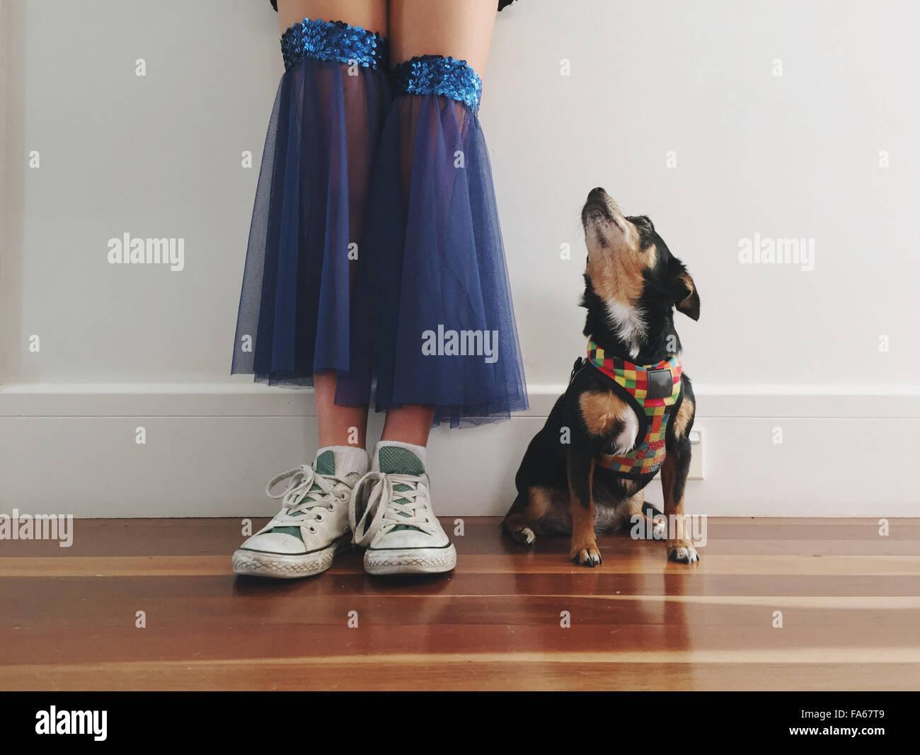 Geringen Teil der Mädchen in einem Tanzkostüm mit ihrem Chihuahua Hund Stockbild