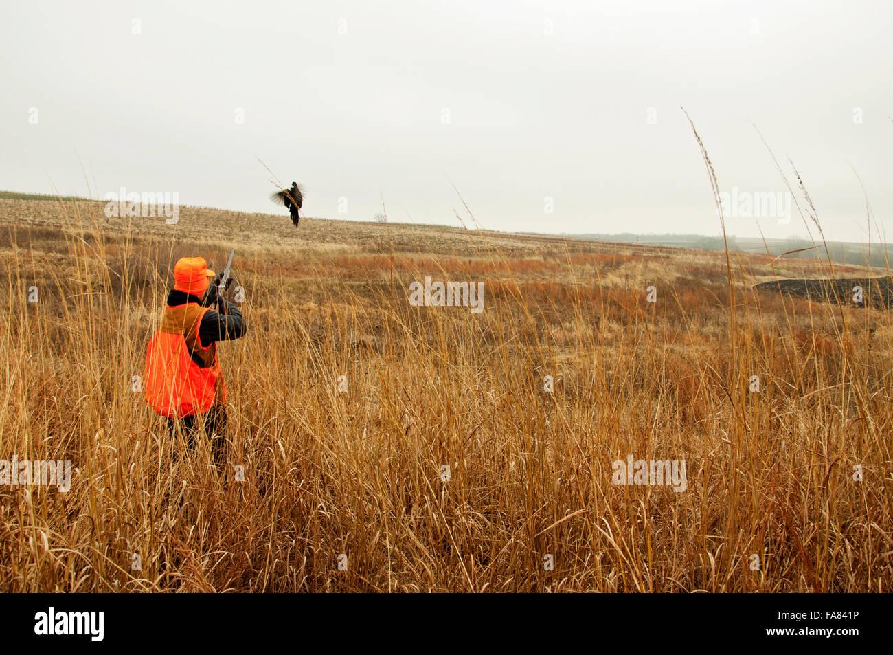 Jäger schießen Fasan im Feld Stockbild