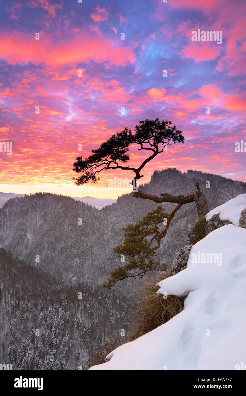Einzigen Baum im Nationalpark Pieniny Berge bei Sonnenuntergang, Polen Stockbild