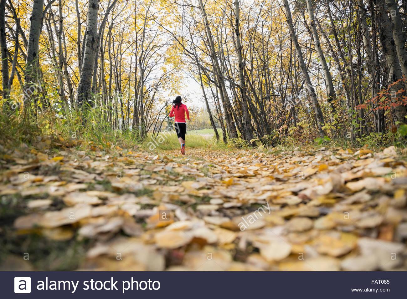 Frau auf Pfad im Herbst Park Joggen Stockbild
