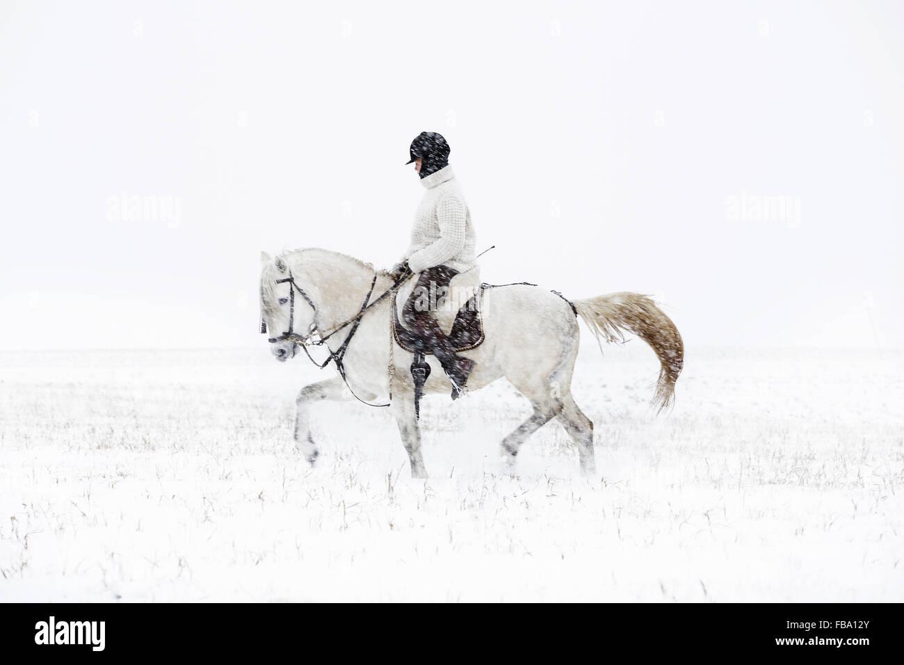 Schweden, Teenage Mädchen (14-15) Reitpferd Stockbild
