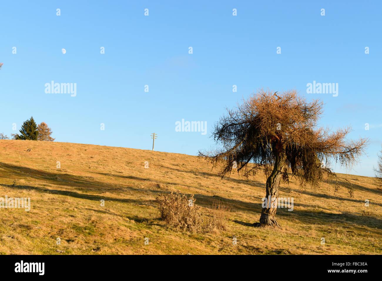Almwiese Im Herbst / Wiese im Herbst Stockbild