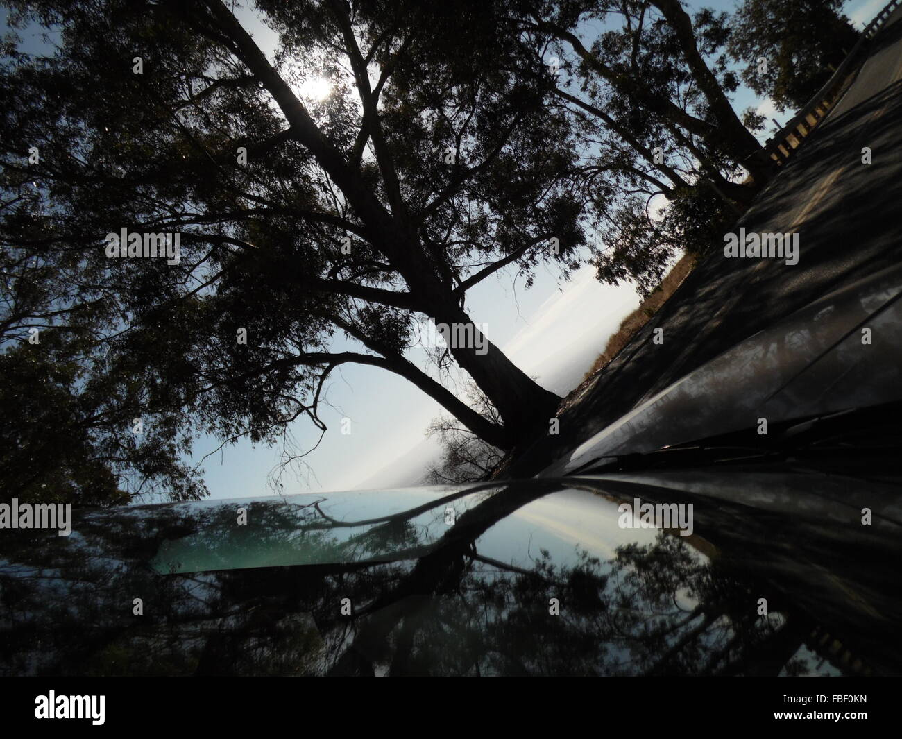Silhouette Bäume Reflexion über Windschutzscheibe Stockbild