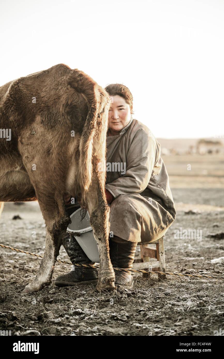 Nomadische mongolische Frau, eine Kuh zu melken, in den frühen Morgenstunden Stockbild