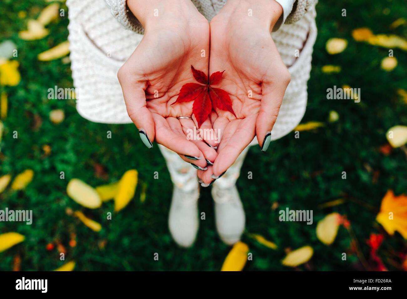 Herbstlaub in Händen der Mädchen Stockfoto
