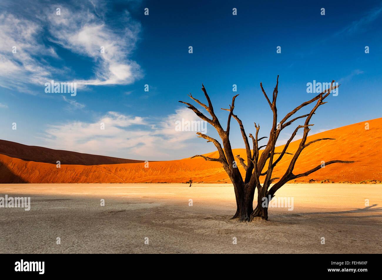 Toter Baum in Sossusvlei im Namib-Wüste, Namibia Stockbild