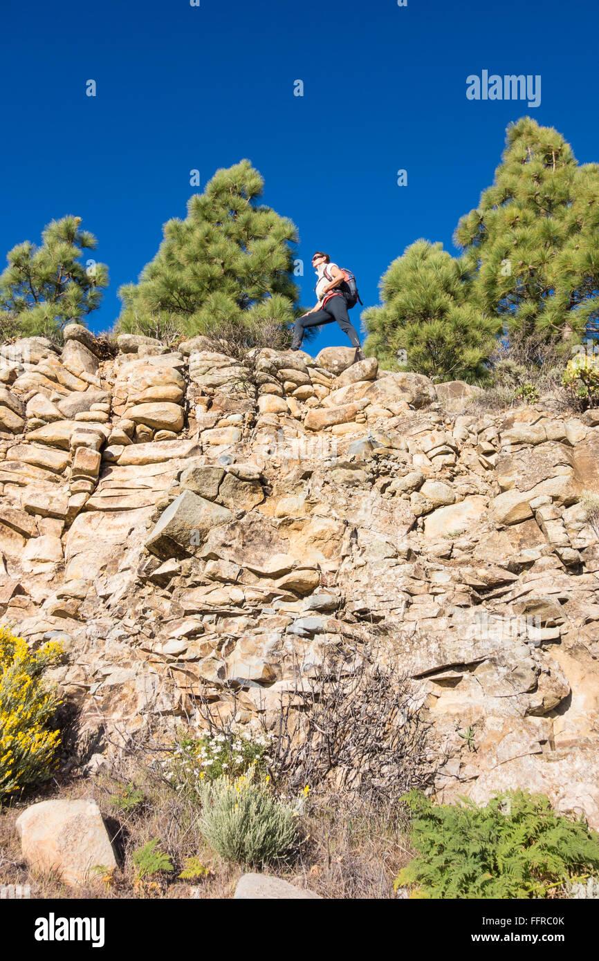 Weibliche Wanderer im Pinienwald in Bergen auf Gran Canaria, Kanarische Inseln, Spanien. Stockfoto