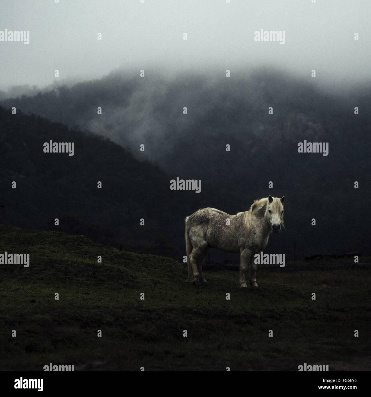 Pferd auf Berg im Nebel Stockbild