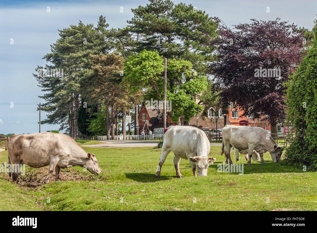Vieh stockfotos vieh bilder alamy for Wildparks in der nahe