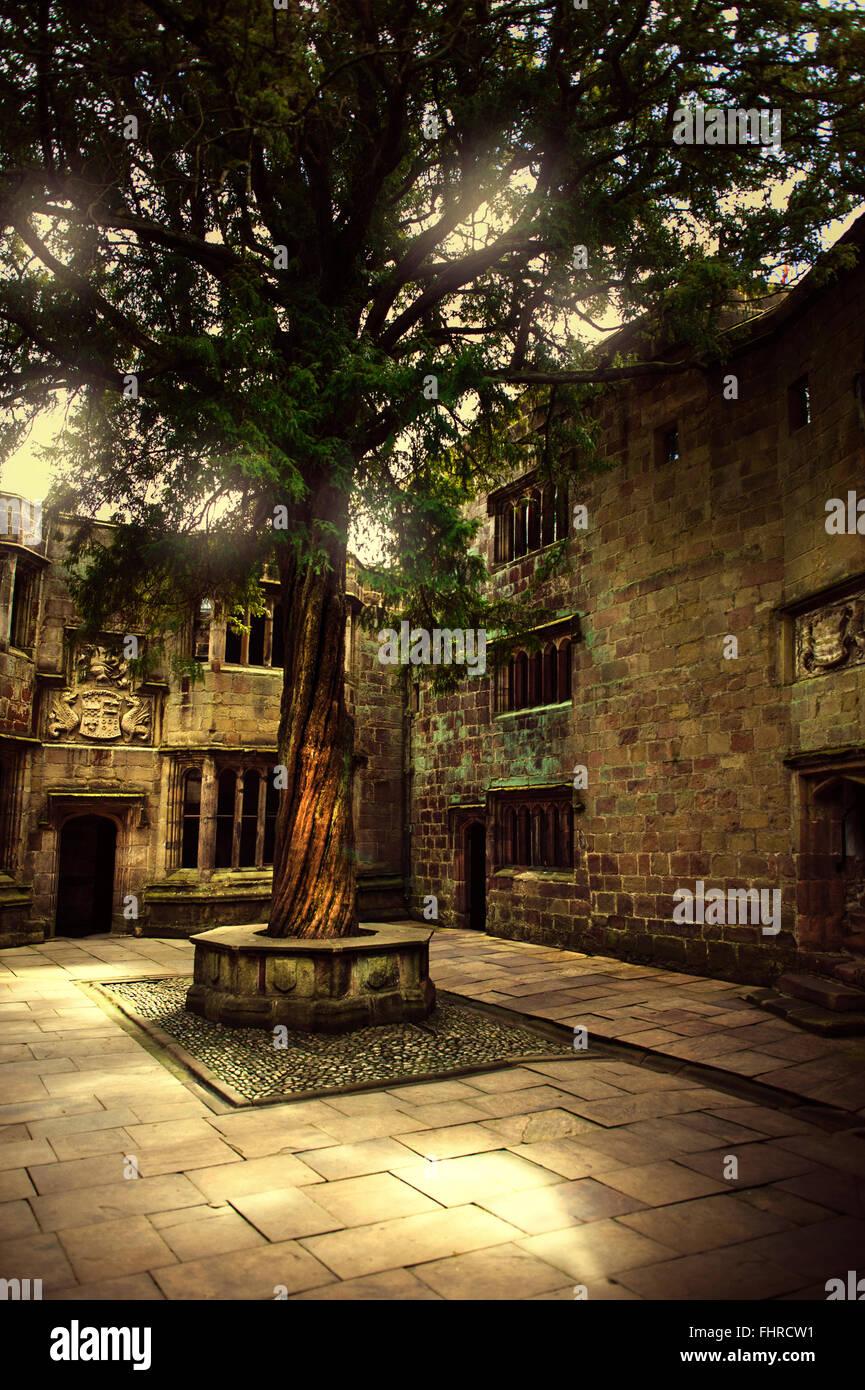 Schlosshof mit einem alten schönen Baum Stockbild