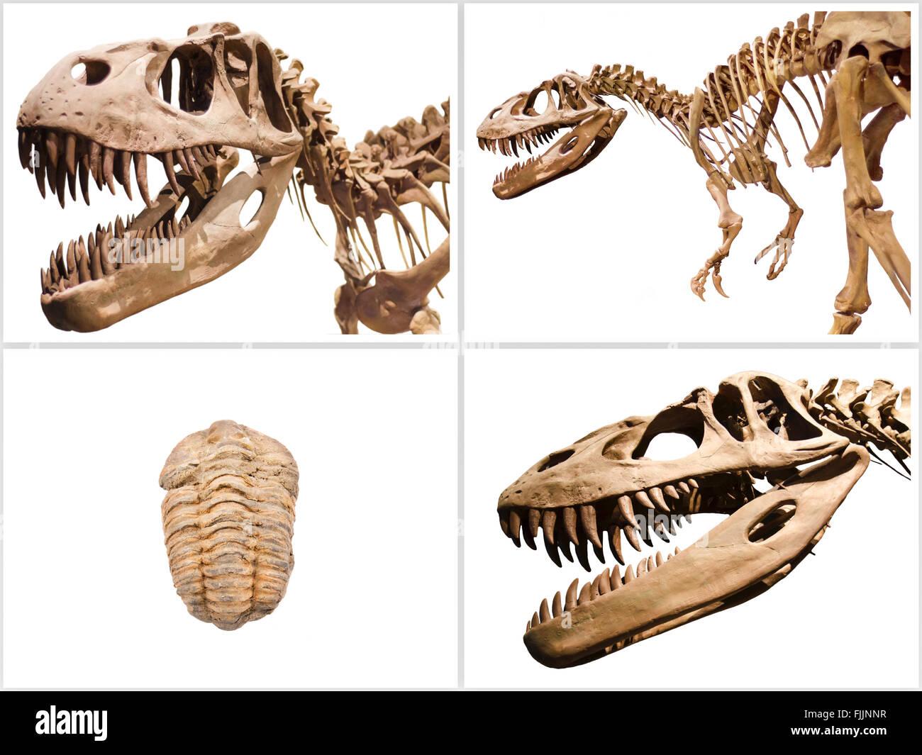 Satz von Skelett und Trilobiten fossilen Dinosaurier, auf weißem Hintergrund isoliert. Stockbild