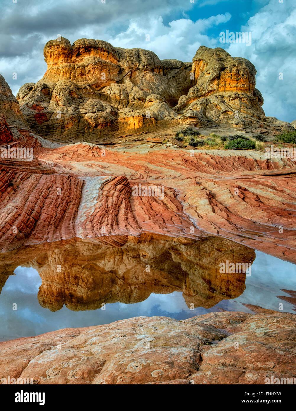 Weiße Tasche mit Regen-Wasser-Pools. Vermilion Cliffs National Monument, Arizona Stockbild