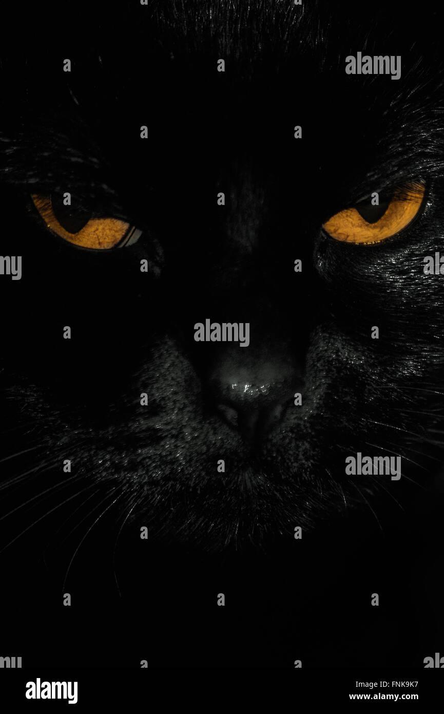 der schwarze Katzenaugen hautnah Stockbild