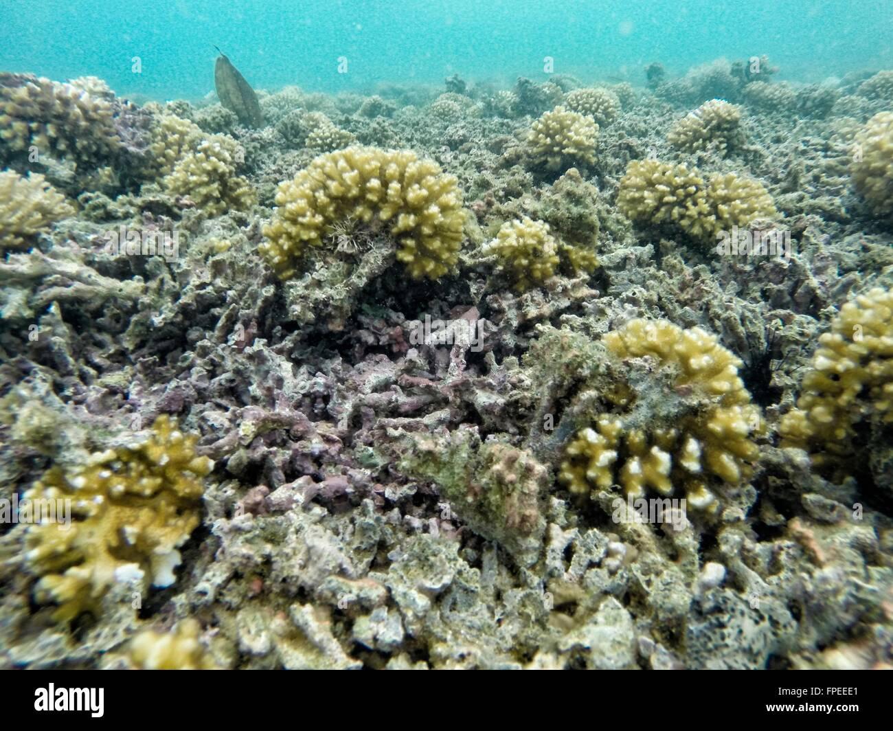 Ungesunde Korallenriff mit mehreren harte Korallen gebrochen Stockbild