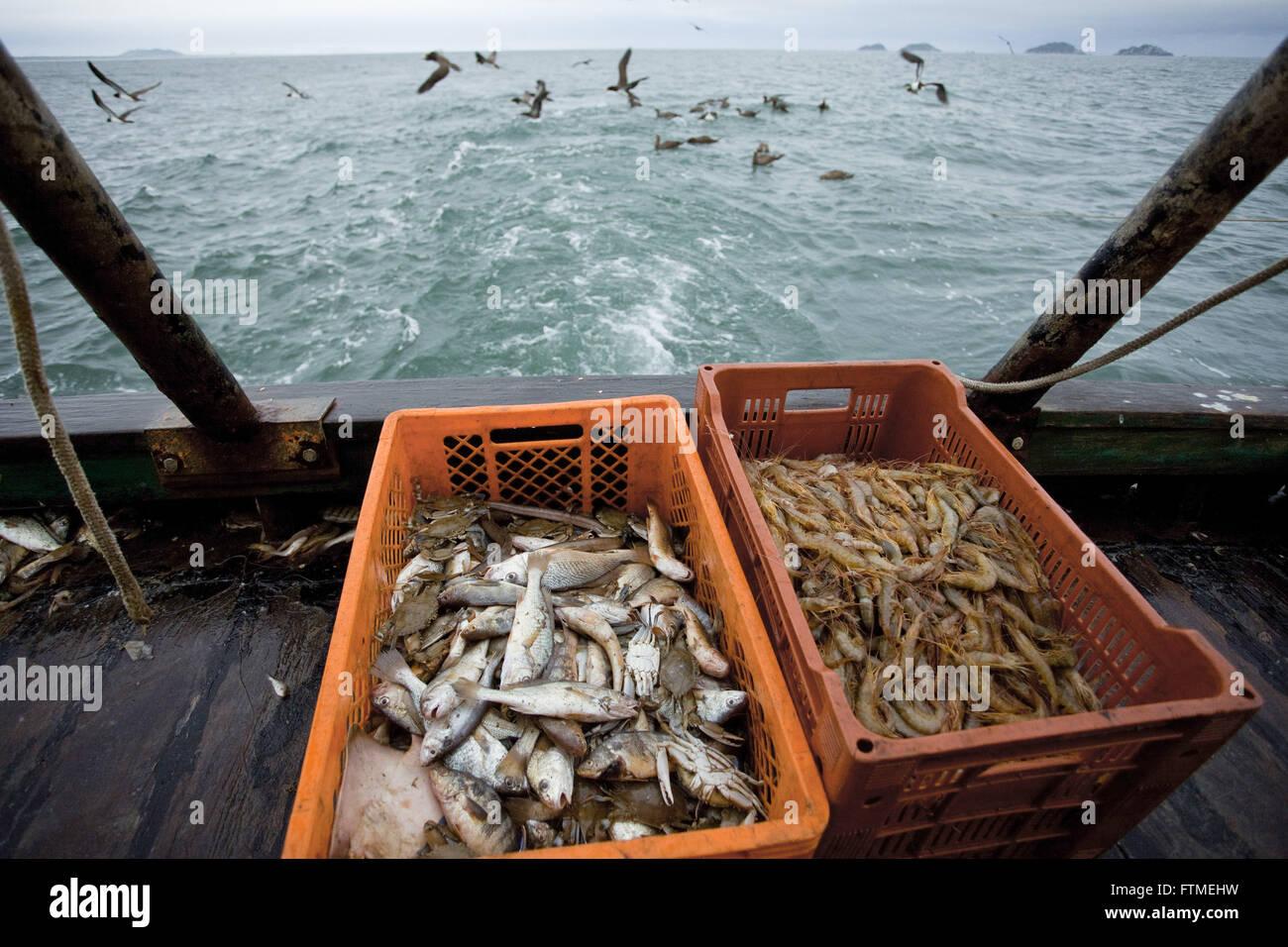 Garnelen und ausgewählten Meeresfrüchten - Garnelen Schleppnetzfischerei der Küste von Santa Catarina Stockbild