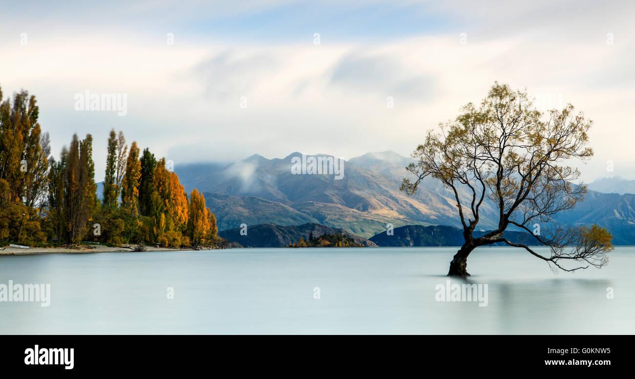 Die kultigen einsamer Baum des Lake Wanaka, Neuseeland. Stockbild