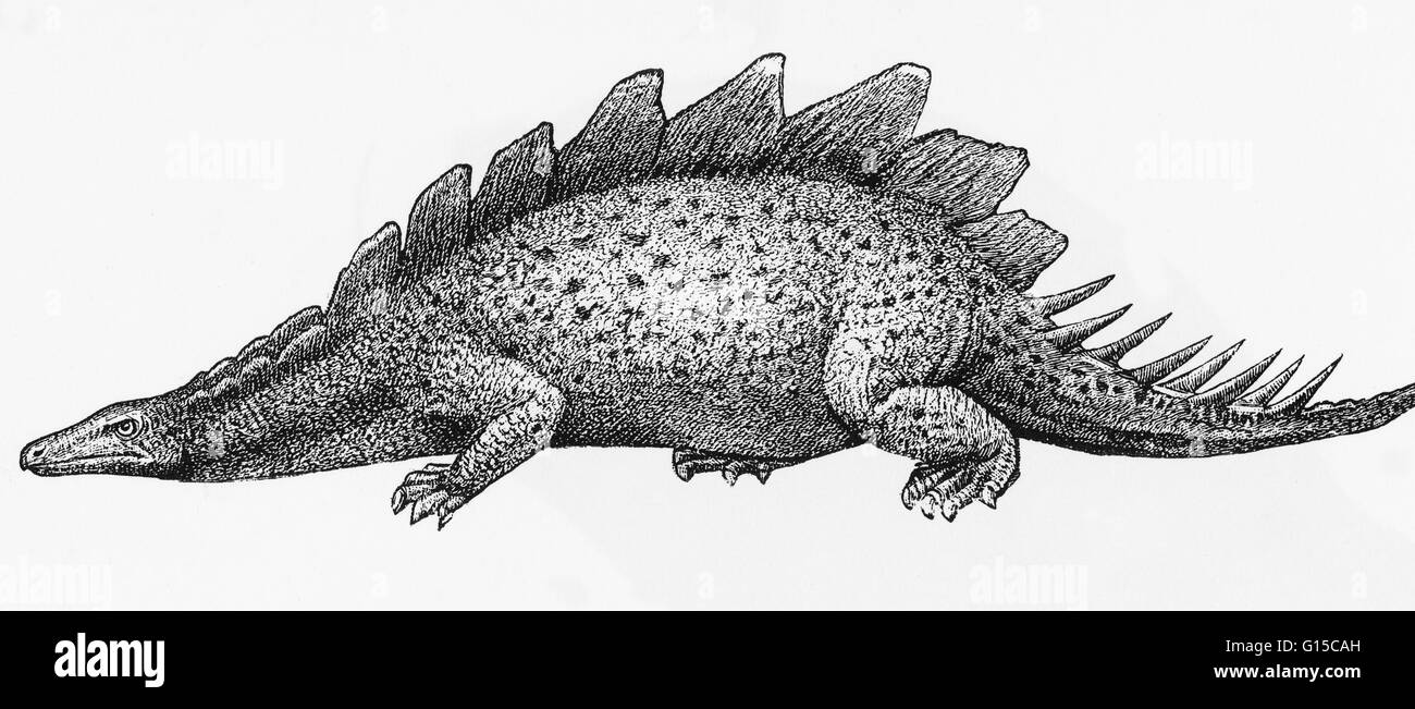 Illustration eines Stegosaurus. Stockbild