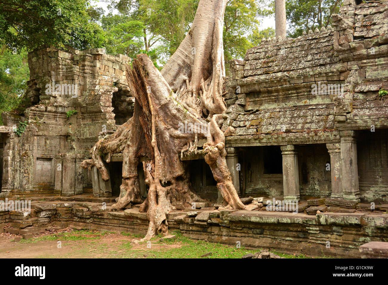 Komplizierte Baumwurzeln im Ta Prohm Tempel. 12. Jahrhundert; Siem Reap, Kambodscha. Stockbild