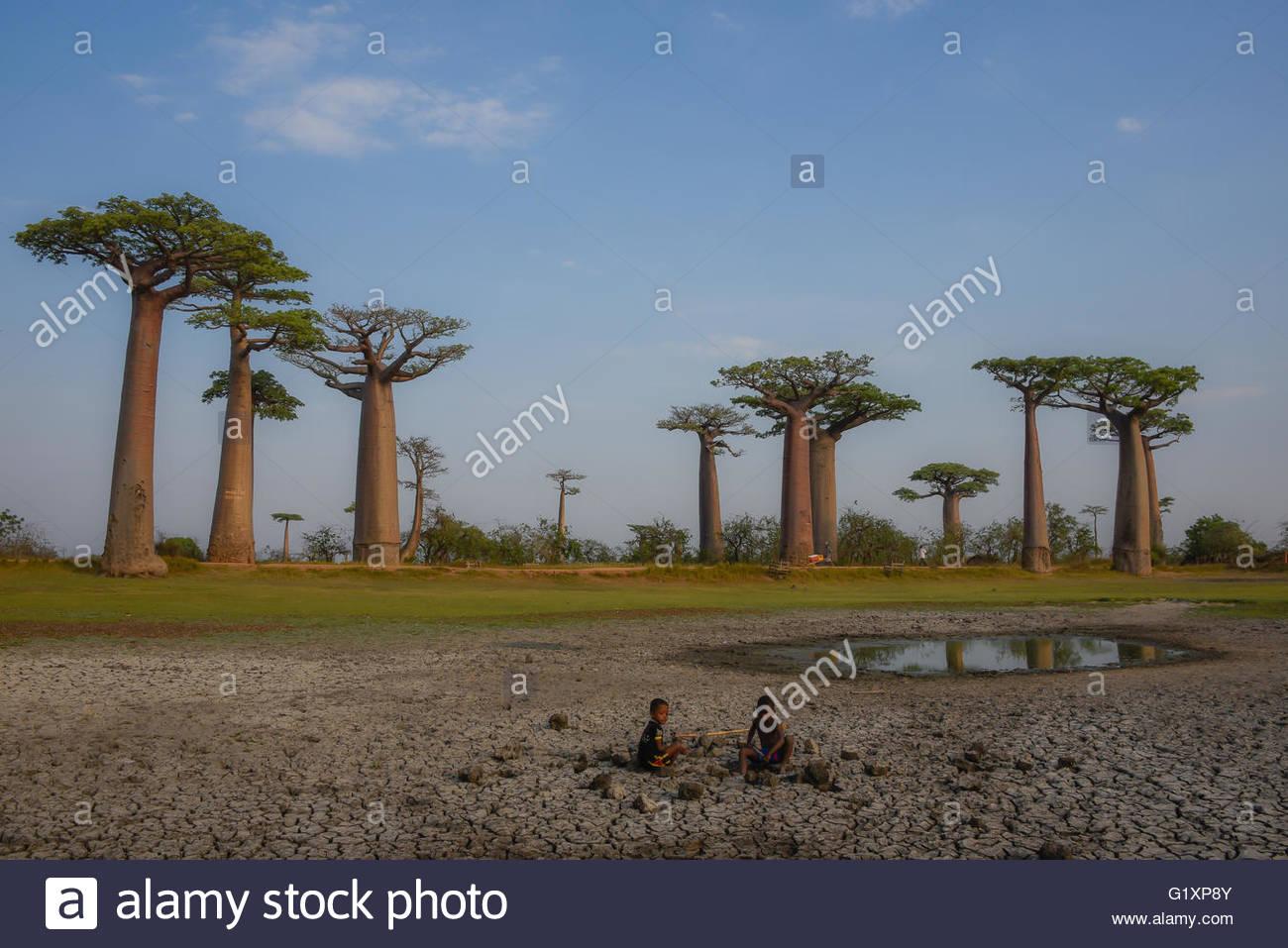 Baobab Bäume entlang einem Sandweg, spielen zwei Kinder in einem trockenen Raum, Allee der Baobabs in Morondava, Stockbild