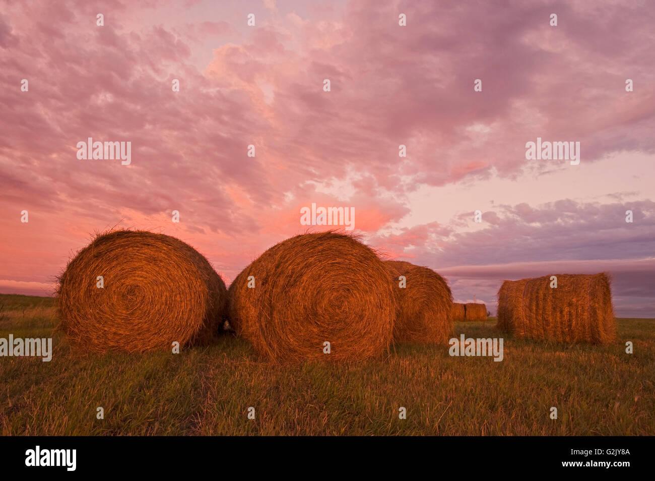 Heu-Brötchen, in der Nähe von Carey, Manitoba Stockbild