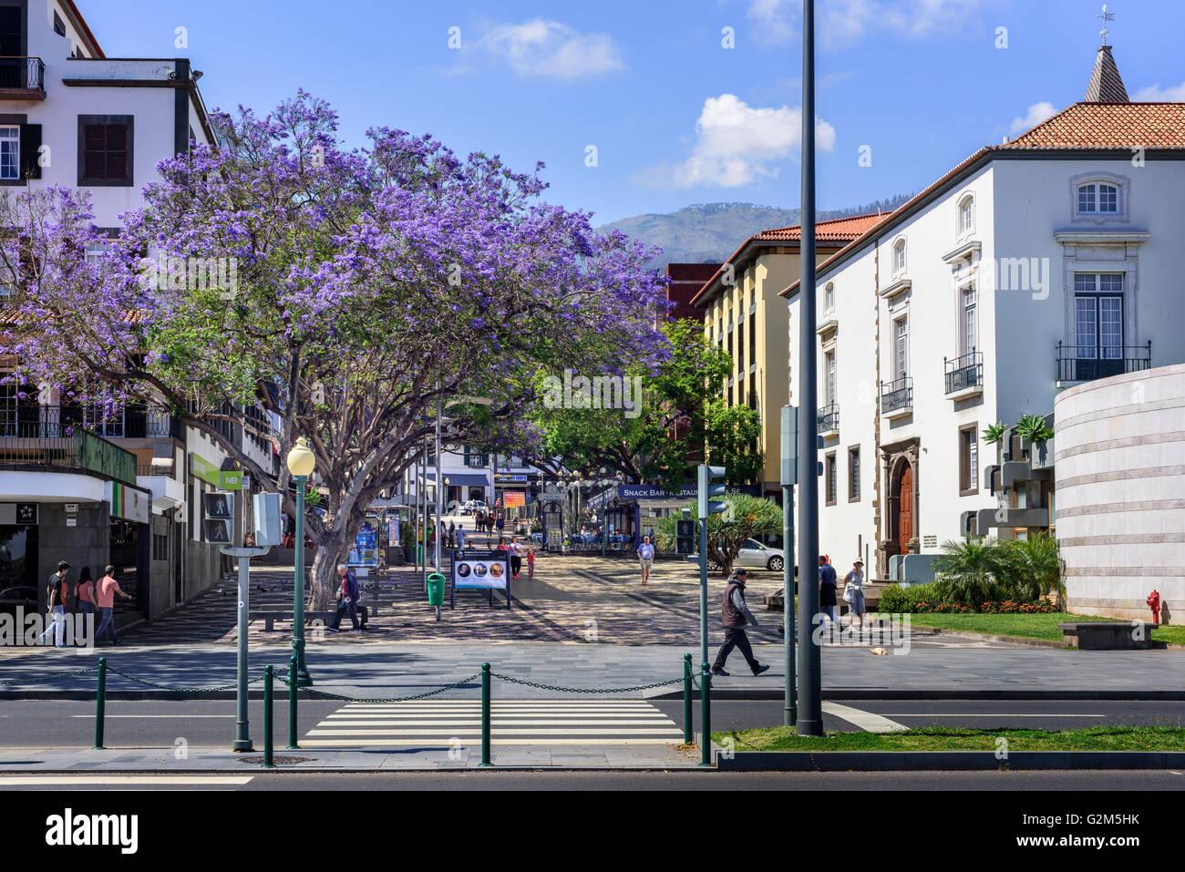 Avenida Do Mar, Funchal Stockbild