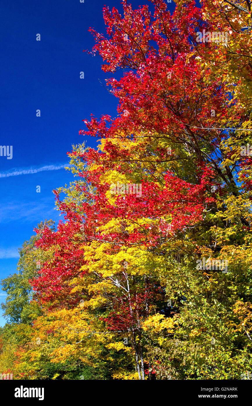 Herbstlaub auf einem ländlichen Rennstreckenareal nördlich von Stowe, Vermont, USA. Stockbild