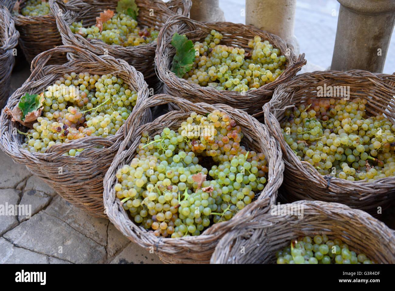 Trauben Sherry Jerez, Andalusien Spanien Weidenkörbe, Weinlese-Weine Stockbild