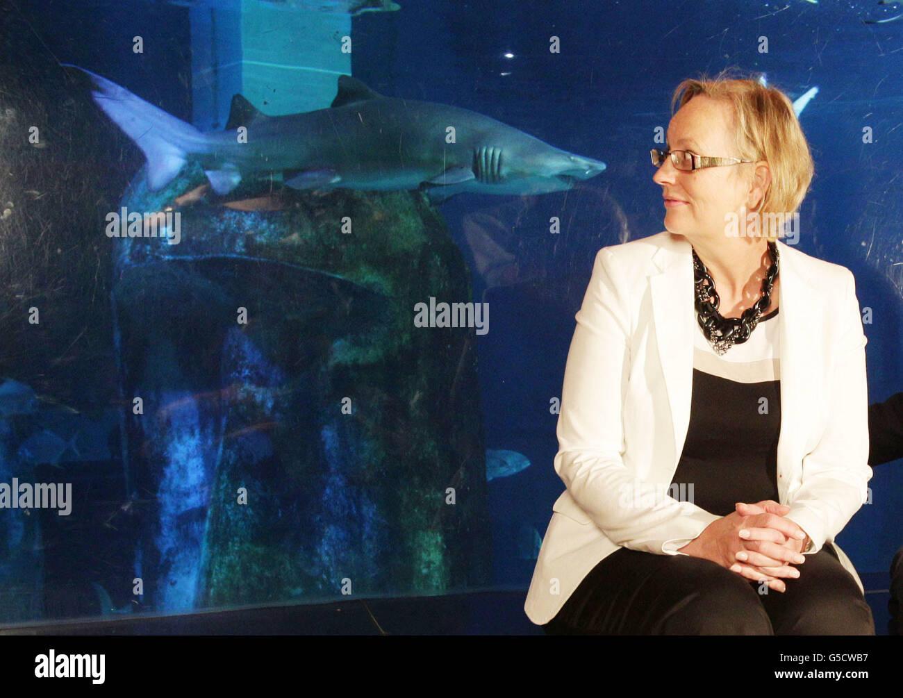 Minister im Wahlkampf Hai schwimmen Stockbild