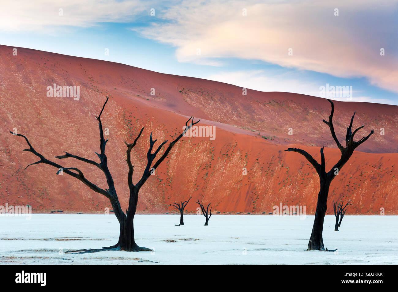 Tote Bäume und roten Dünen im Dead Vlei, Sossusvlei, Namibia Stockbild