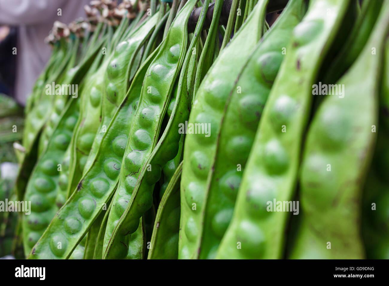 Sato ist eine Pflanze, die als Lebensmittel Zutaten Südthailand hat einen sehr stechenden Geruch Stockbild