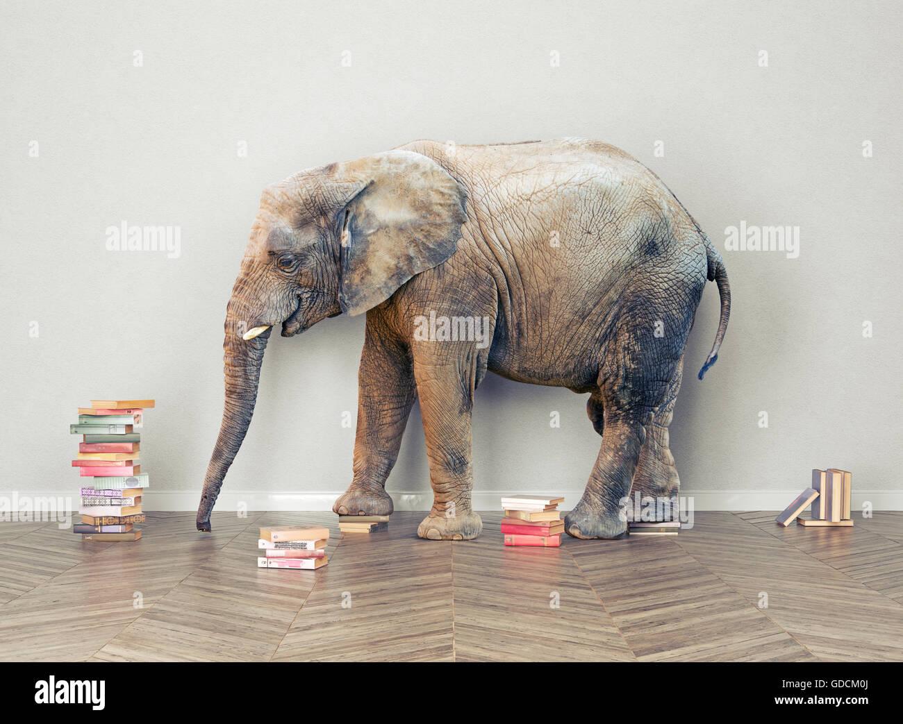 ein Elefant im Raum mit Booksl. Kreativkonzept Stockbild