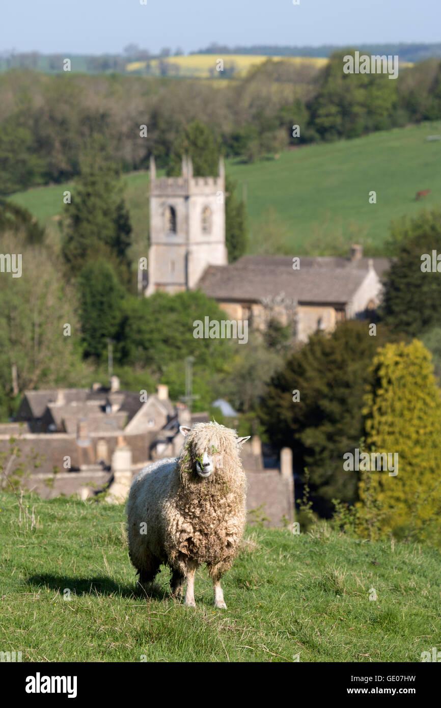 Cotswold lion Schafe über Dorf, naunton, Cotswolds, Gloucestershire, England, Vereinigtes Königreich, Stockbild