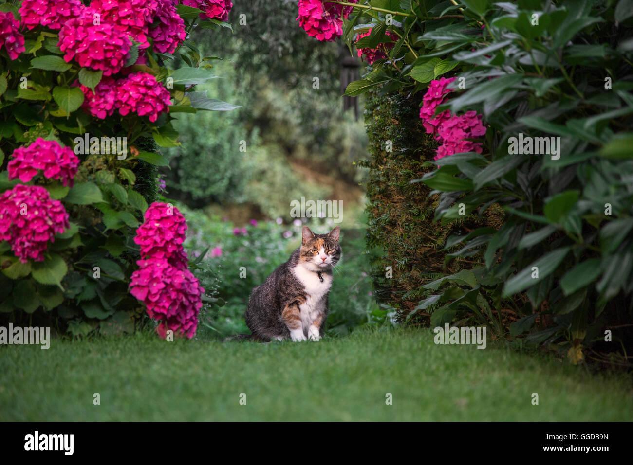 Hauskatze, die im Sommer im Garten sitzen Stockbild
