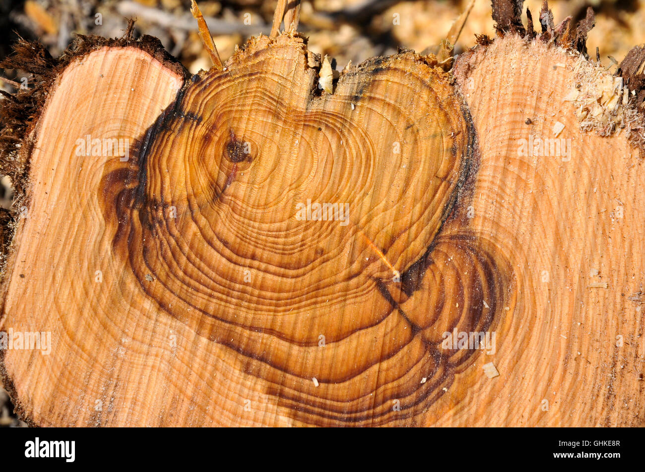 Tree ring growth dating advice 3