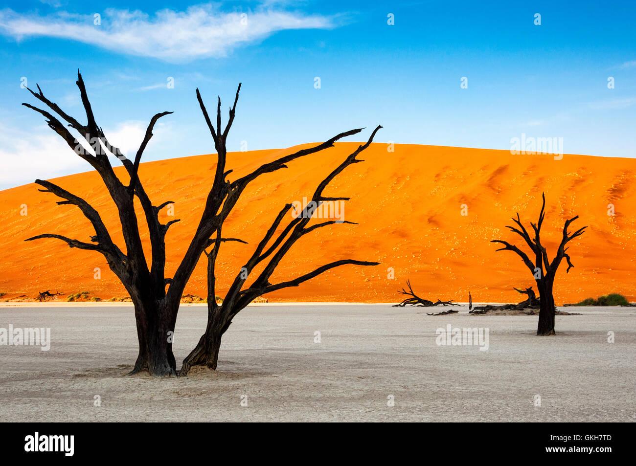 Bäume und roten Dünen im Dead Vlei, Sossuslvei, Namibia; Konzept für Reisen in Afrika Stockbild
