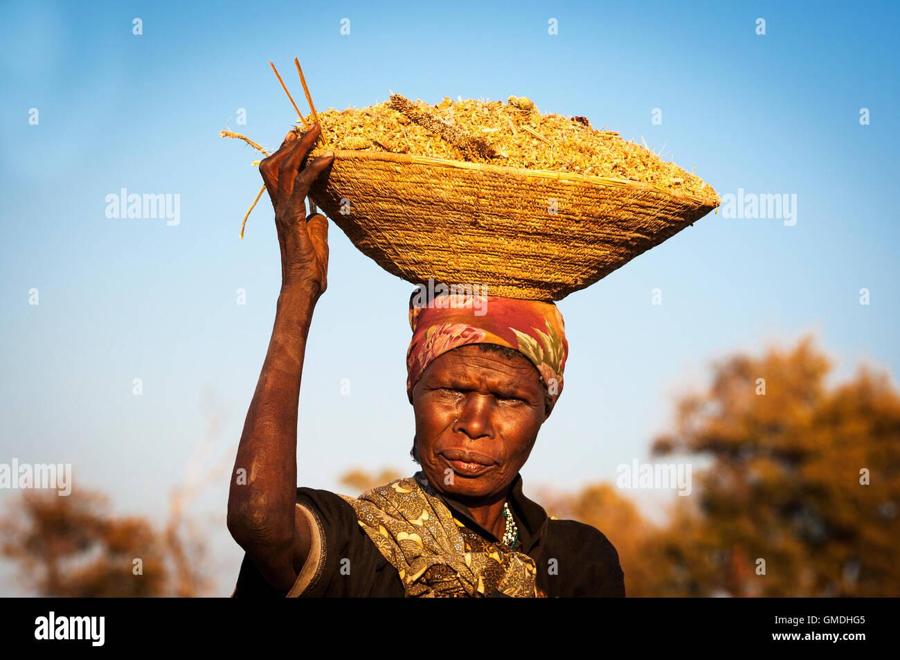 Caprivi Strip, Namibia - 20. August 2011: Afrikanerin Ausgleich einen Korb mit Getreide in ihrem Kopf in Namibia, Stockbild