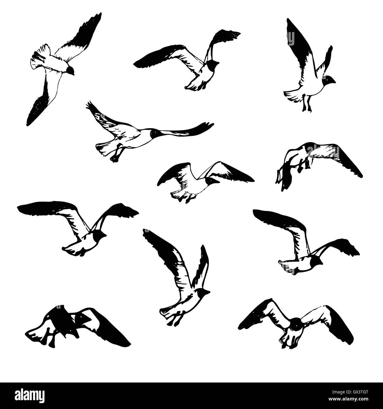 seagull sketch stockfotos  seagull sketch bilder  alamy